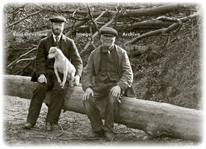 Two gents and dog sitting on tree