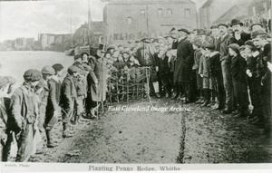 Whitby Planting the Penny Hedge